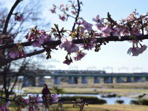 奥に見えるのは二子橋と東急線・二子玉川駅