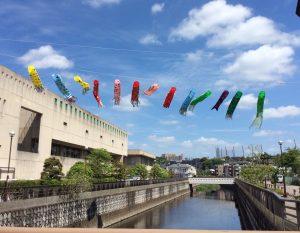 2017年5月仙川に架かるこいのぼり