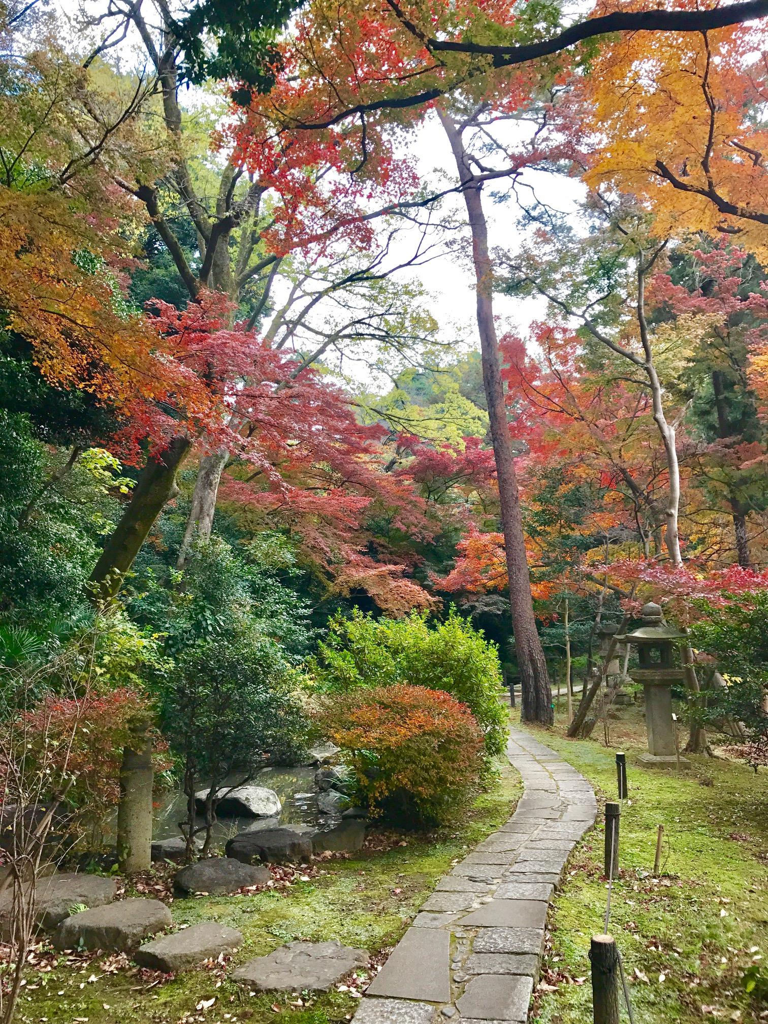 紅葉を愛でながら散策できる広い庭園です。