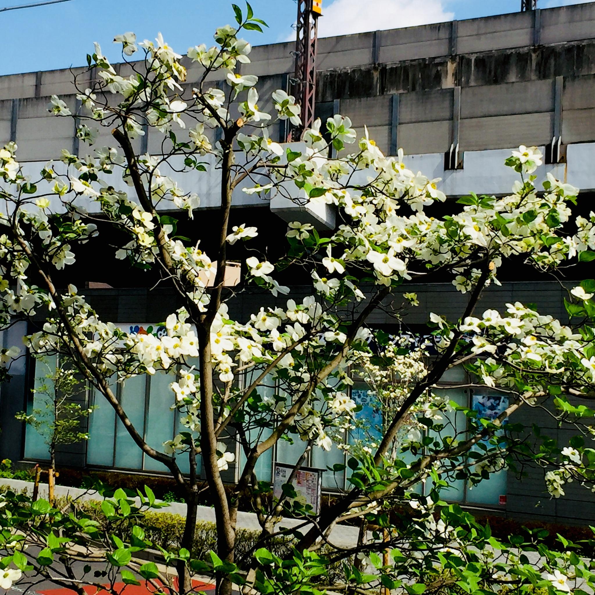 イキイキと咲いています!
