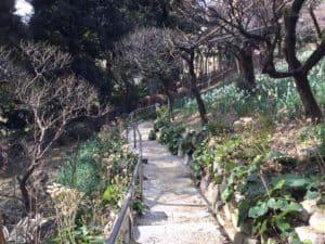 静嘉堂文庫の梅と水仙がすごいよ。
